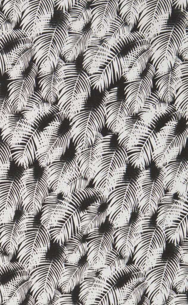 Acacia Kuau Pareo Night Palm