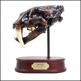 Smilodon Skull Model