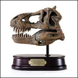 Tyrannosaurus Rex Skull Model