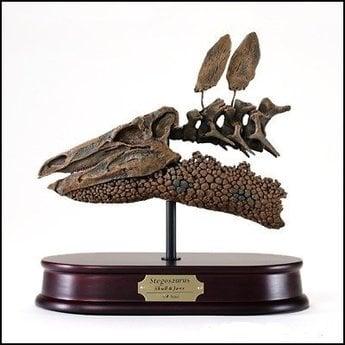 Stegosaurus Skull Model