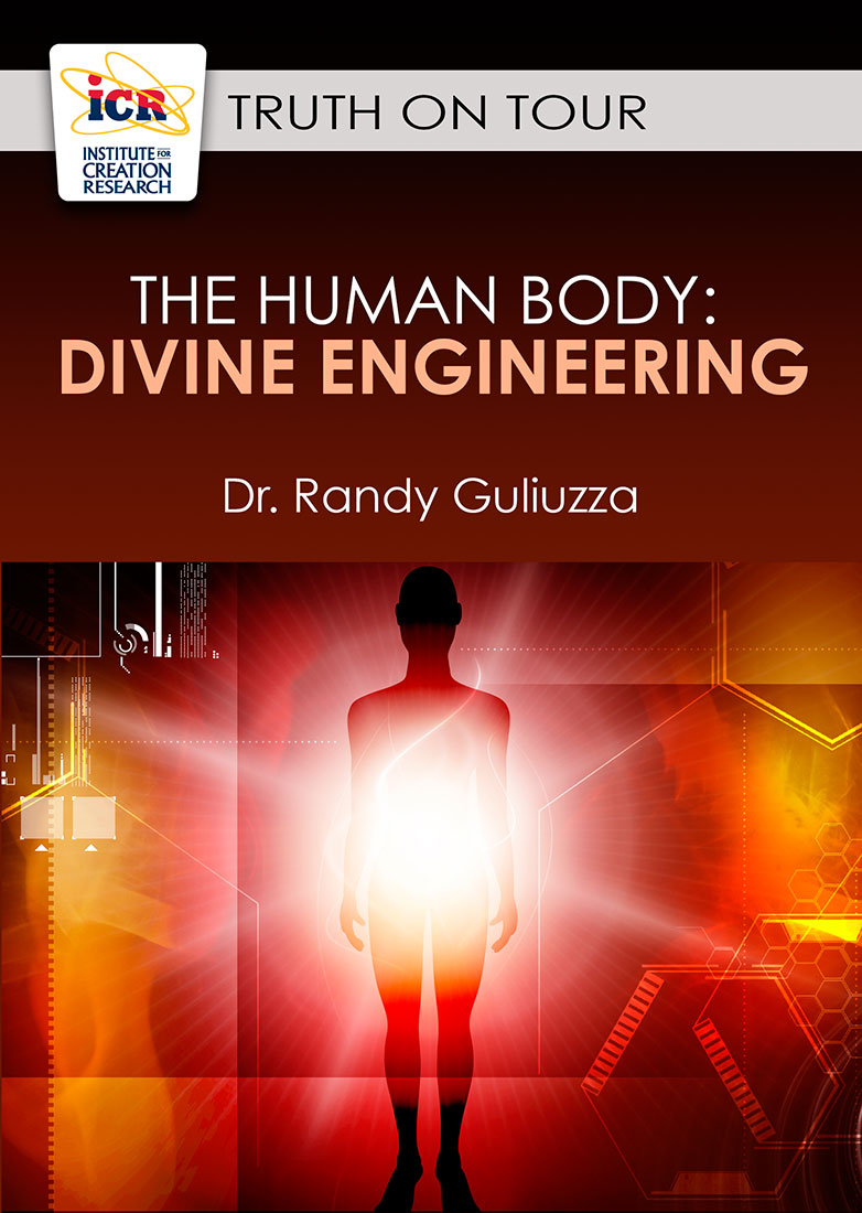 The Human Body: Divine Engineering