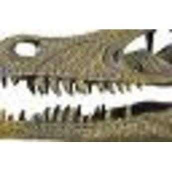Velociraptor Skull Model