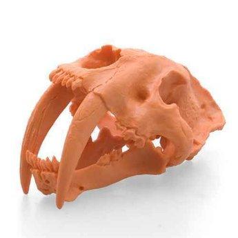 Smilodon Skull - Giant Eraser
