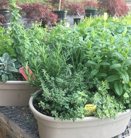 """Container Herbs, 16"""" Oval"""