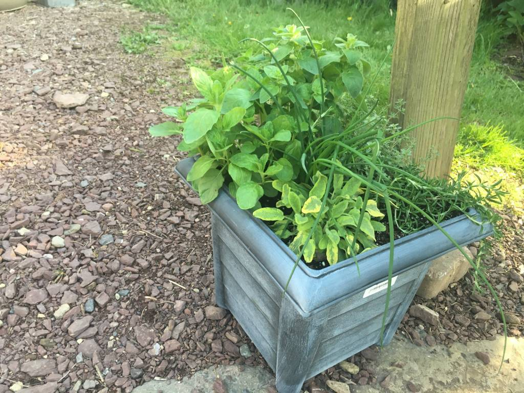 """Container Herbs, 12"""" Round Pot"""