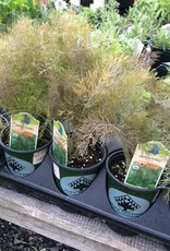 Vegetable/Herb, organic Qt