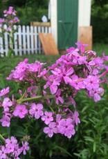 Phlox pan. Jeana Phlox - Garden, Jeana, #1