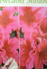 Azalea Girard's Crimson Azalea, Girard's Crimson, #3