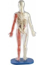 Quarto USA Squishy Human Body by Smart Lab
