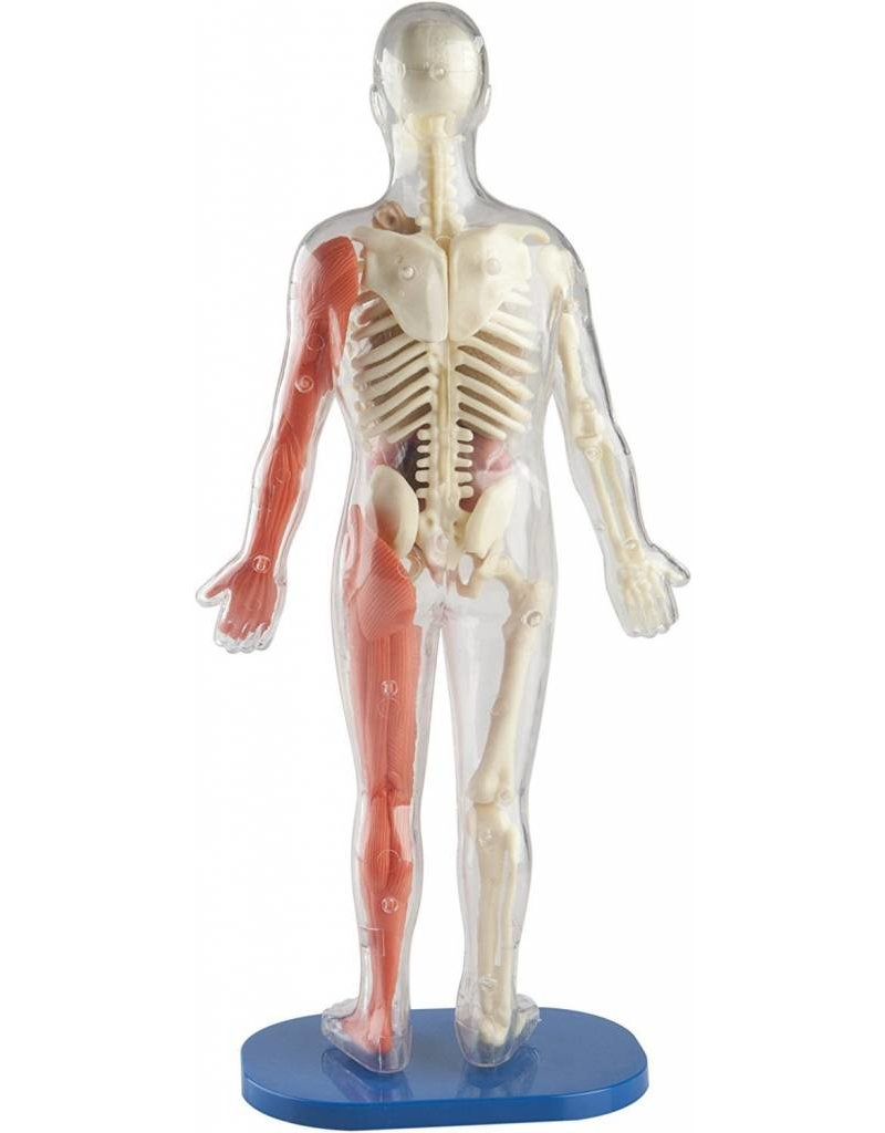 Squishy Human Body by Smart Lab