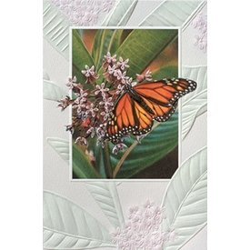 Home Decor Monarch Butterfly Birthday Card - 80197