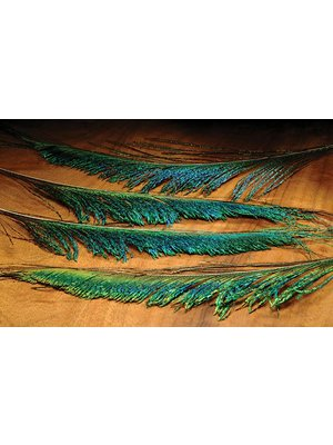 Hareline Peacock Sword-4 Pack