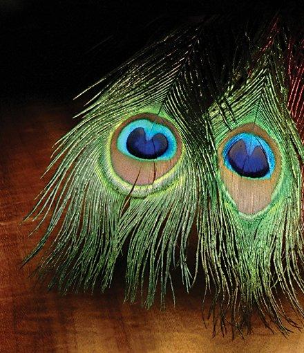 Hareline Peacock-Eye Sticks-4 Pack