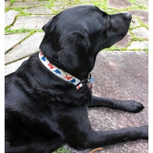 Pesca Muerta Dog Collar
