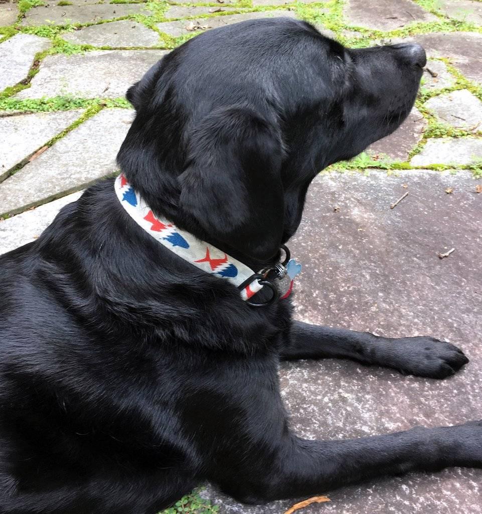 Pesca Muerta Dog Collar