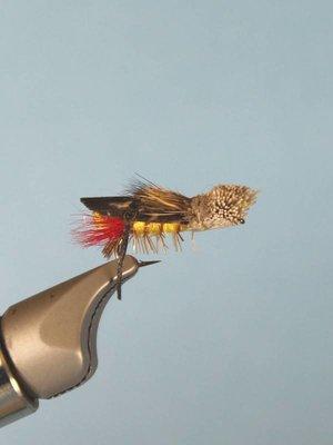 Dave's Hopper 14