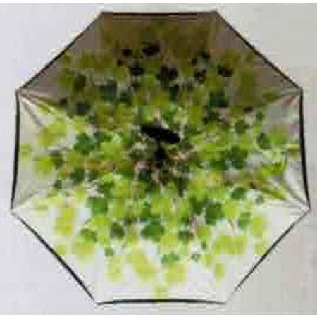 Umbrella Ivy