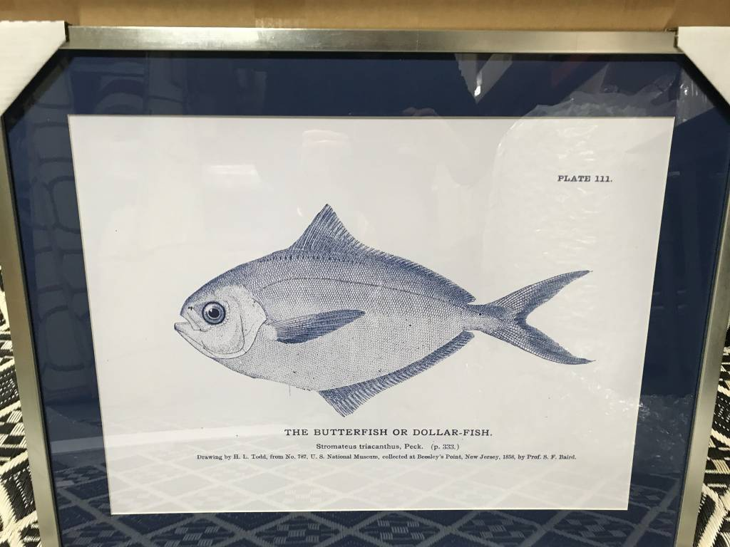 Fish Print in Silver Frame with Navy Mat - The Spotted Whale