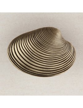 Clam Shell Brass Knob