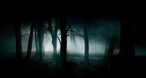 13 Forêts hantées aux quatre coins du monde