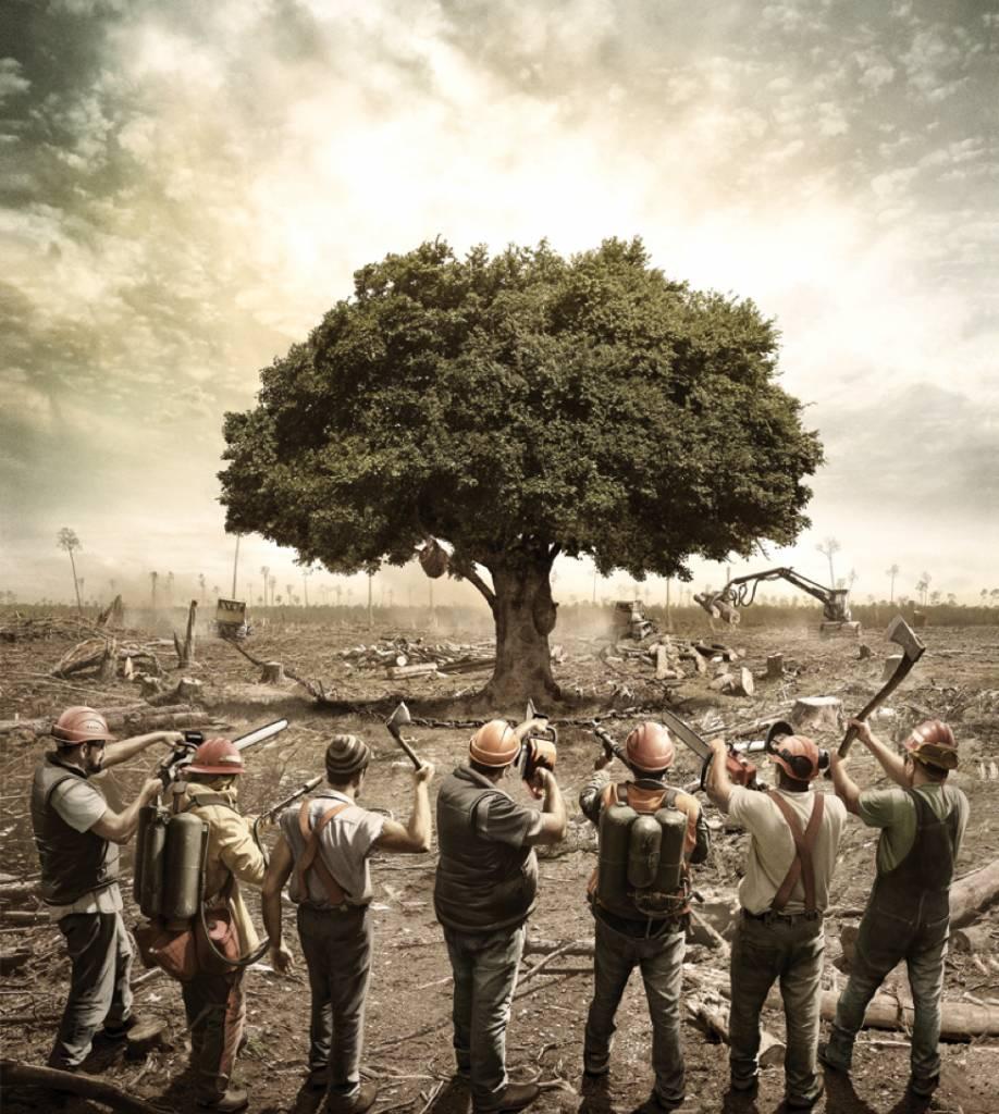 Déforestation: 30 publicités qui choquent