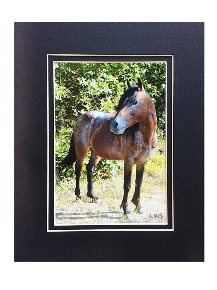 "*LS - CSC006 Chahta Horse Series ""Dr. Phill II, Choctaw Stallion"""