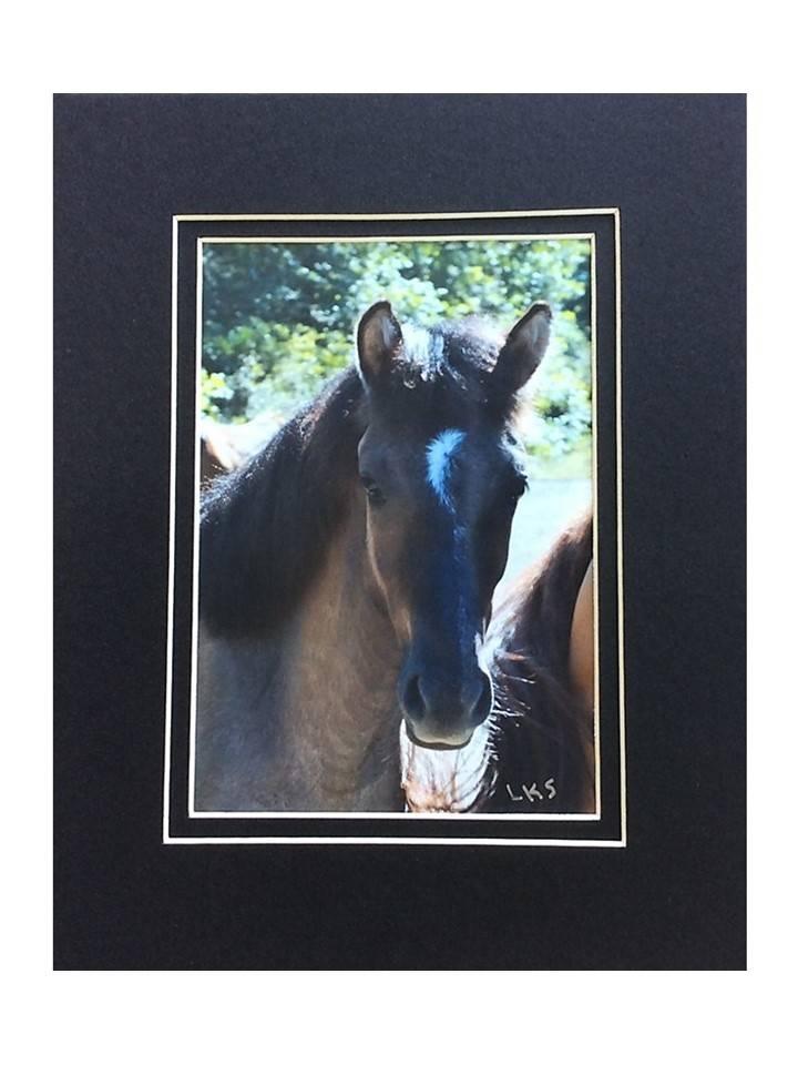 """*LS - CSC003 Chahta Horse Series """"Crescent 2"""""""