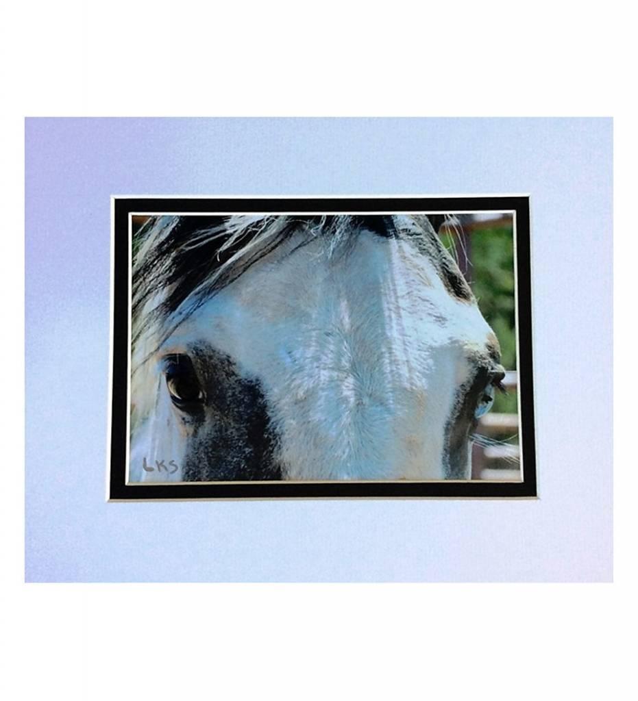"*LS - CSC008 Chahta Horse Series ""Nishkin Okchakko (Blue Eye)"""