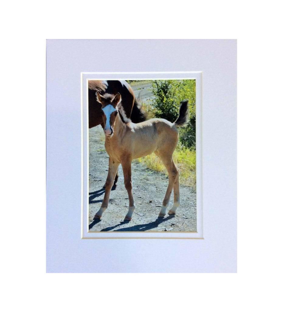 """*LS - CSC005 Chahta Horse Series """"Himitta"""""""