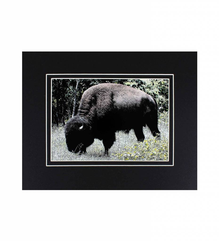 """*LS """"Nushkoboka"""" Buffalo"""