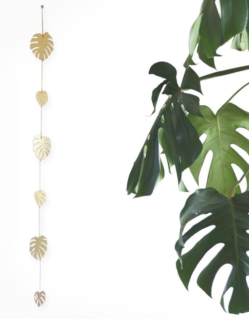 Natalie Joy Monstera Deliciosa 6 Leaf Vine