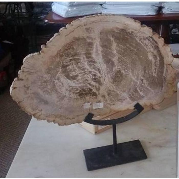 Large Petrified Wood on Stands