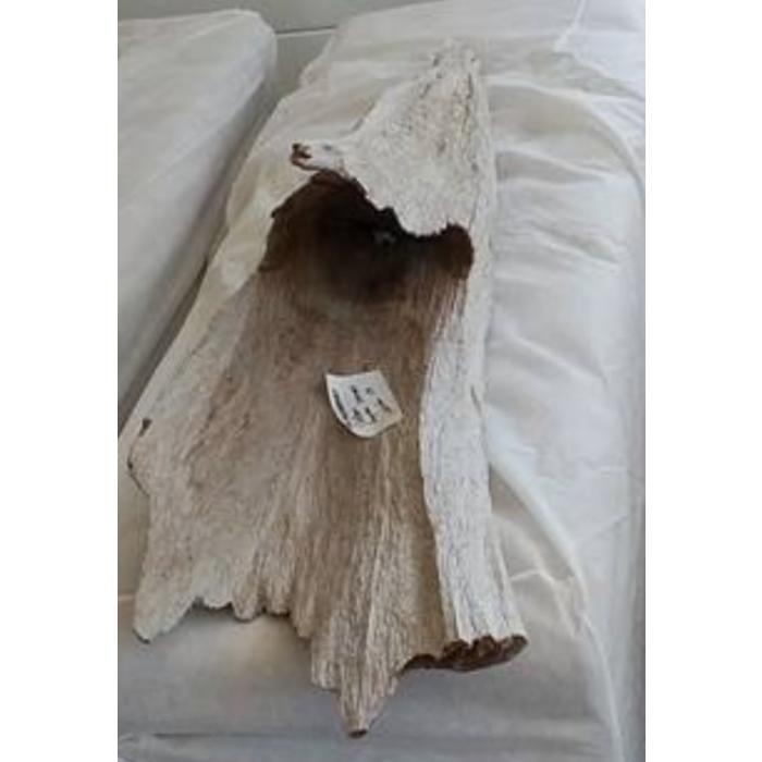 Cove Driftwood 2
