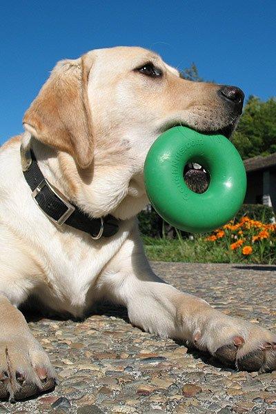 Goughnut round