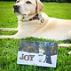 Holiday Card - Joy