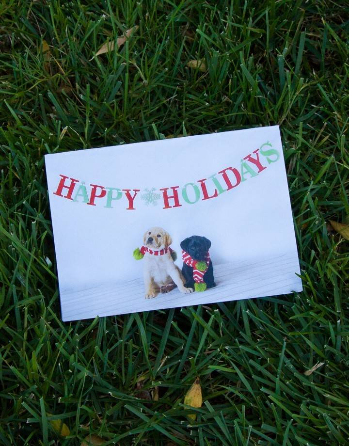 Holiday Cards - pups in scarves