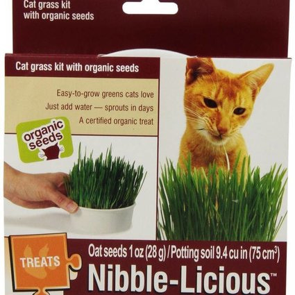 Nibble-Licious Organic Cat Grass Kit