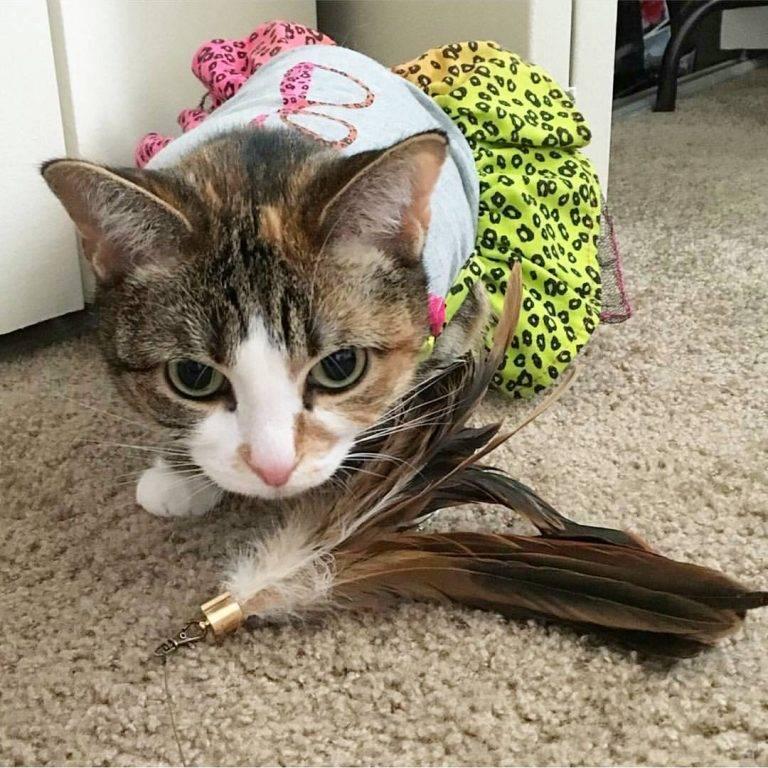 SAVAGE CAT FOOD Savage Cat Toy