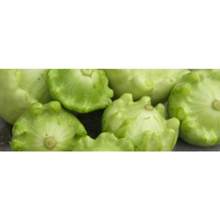 Courgette Patisson panaché jaune-vert