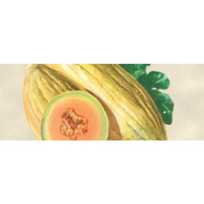 Melon Banana