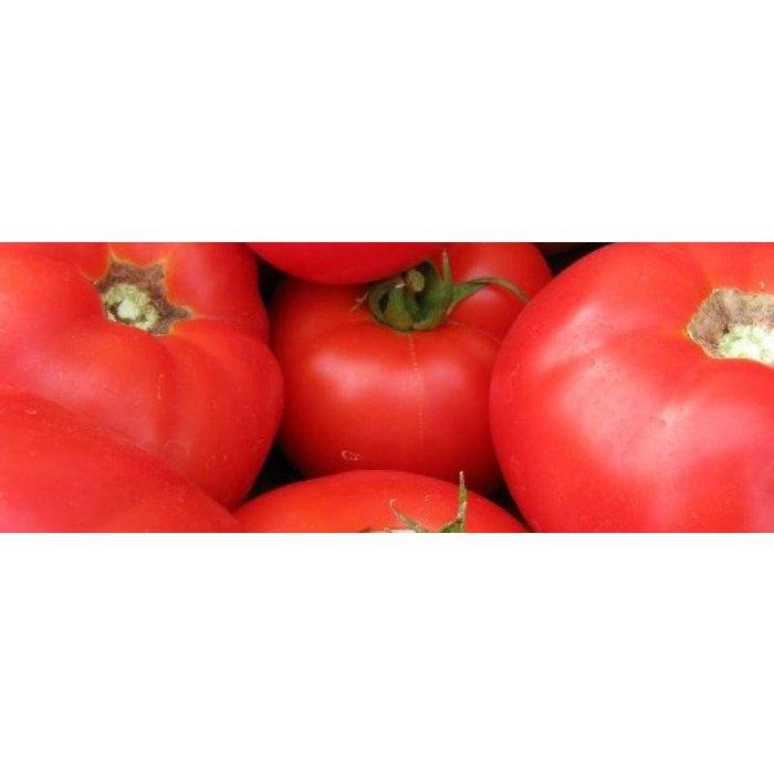 SEMENCE Tomate Beefsteak