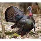 "Nice Targets Nice Targets TNT Turkey Target 20"" x 22.5"""