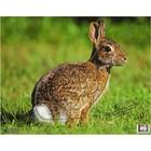 "Nice Targets Nice Targets TNT Rabbit Target 11.25"" x 14.25"""
