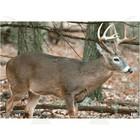 """Nice Targets Nice Targets TNT Deer 1BR Target 28"""" x 40"""""""