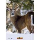 """Nice Targets Nice Targets TNT Deer 3S0 Target 28"""" x 40"""""""