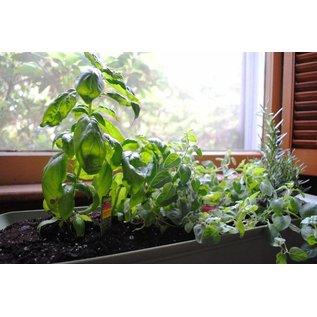 Little Miss Fancy Plants DIY Fancy Plants- Kitchen Herbs June 1