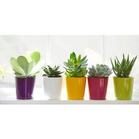 Little Miss Fancy Plants Teacher Gifts! Kids succulent planting workshop