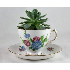 Little Miss Fancy Plants Teacup succulent class - 9:30am Aug 25