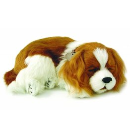88 Unlimited Perfect Petzzz Cavalier King Charles