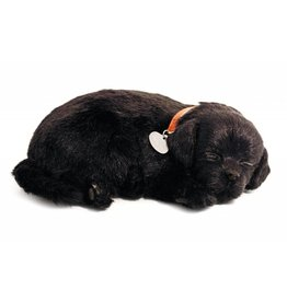 88 Unlimited Perfect Petzzz Black Labs